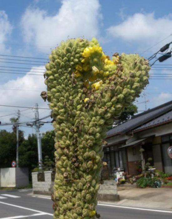 fukushima_33