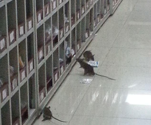 chinese_hospital_02
