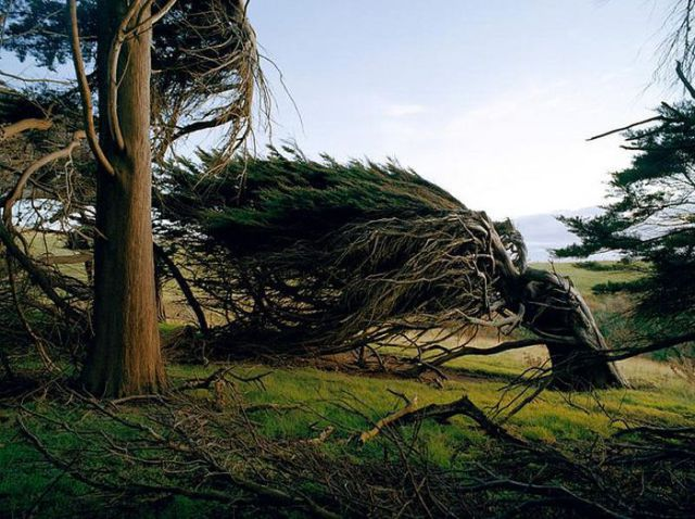 antarctic_winds_give_these_trees_unusual_shapes_640_05