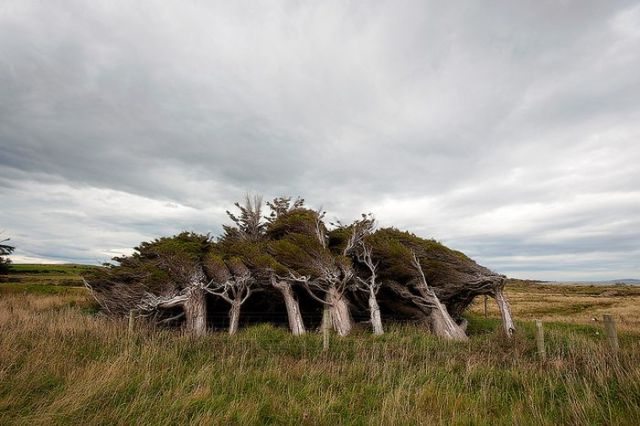 antarctic_winds_give_these_trees_unusual_shapes_640_12