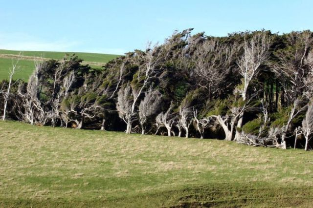 antarctic_winds_give_these_trees_unusual_shapes_640_17