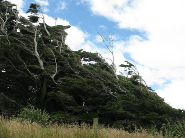 antarctic_winds_give_these_trees_unusual_shapes_640_18