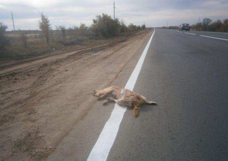orsk_road_dog_01