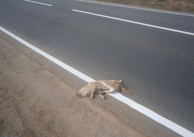 orsk_road_dog_02