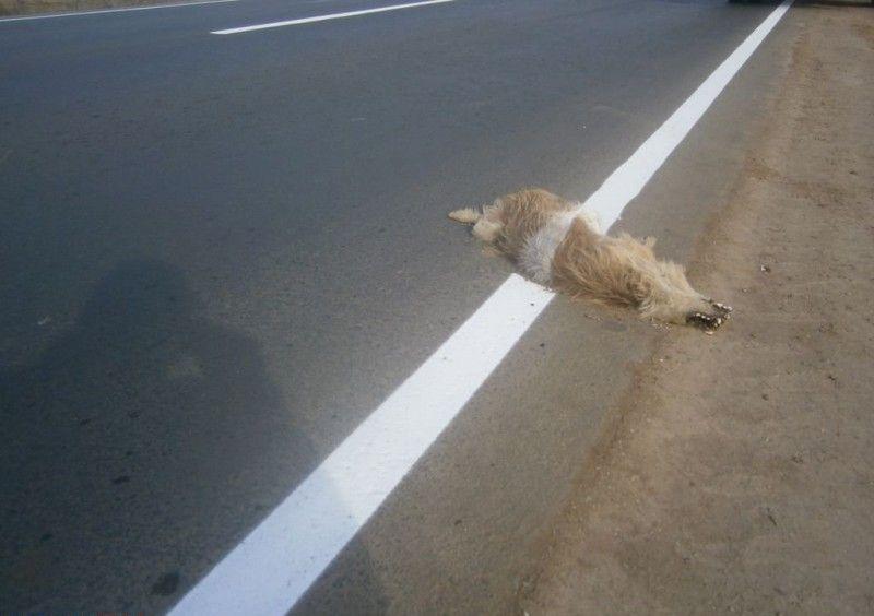 orsk_road_dog_03