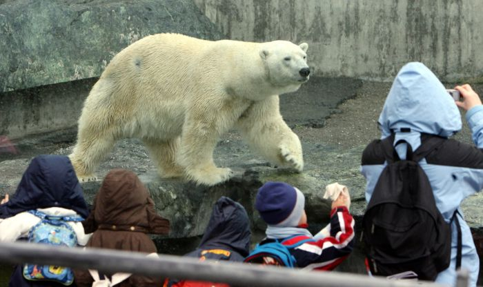 polar_bear_anton_01