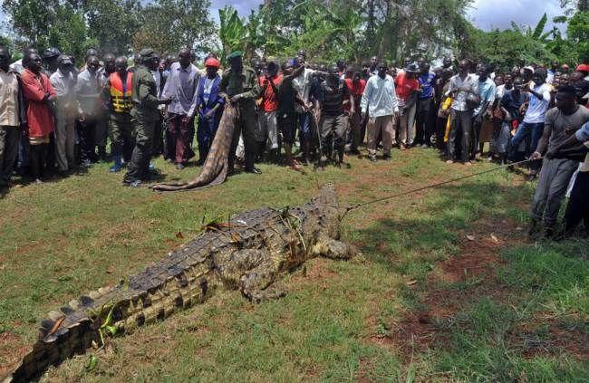 uganda_crocodile_01
