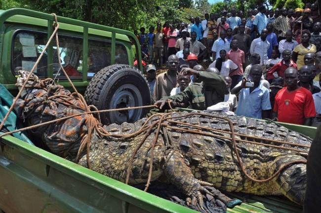uganda_crocodile_02