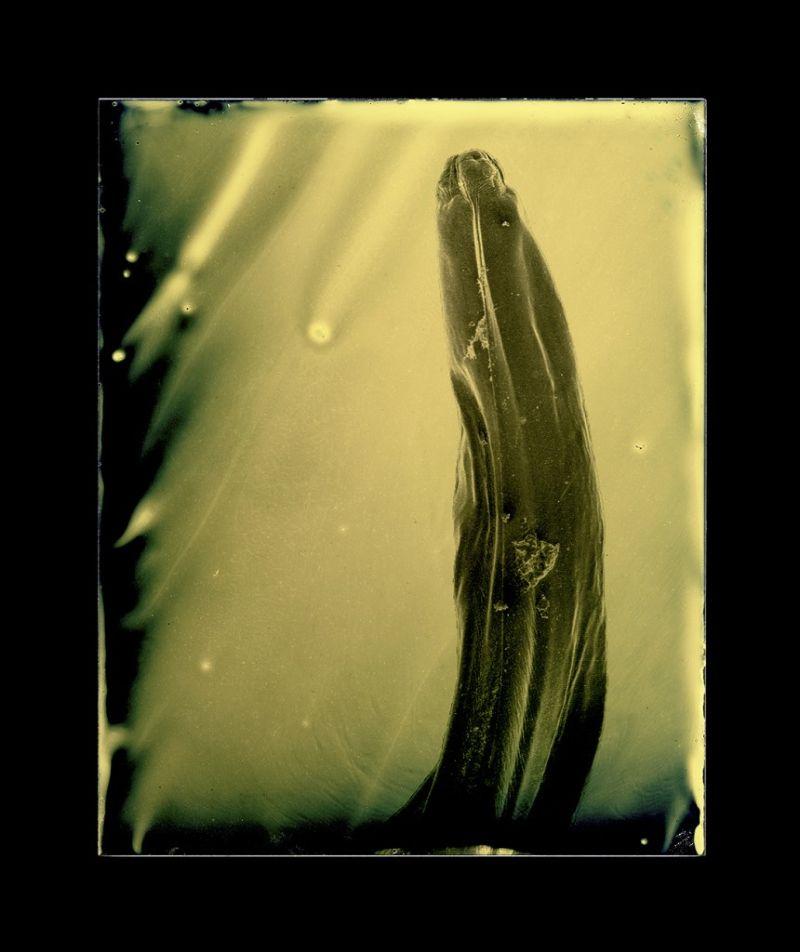 micro_parasites_12