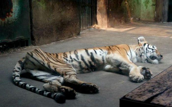 chinese_zoo_01