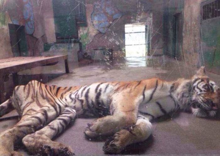 chinese_zoo_02