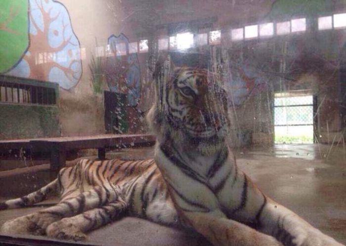 chinese_zoo_03