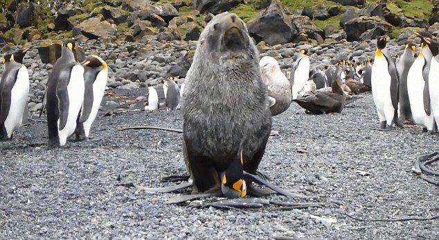 seals_penguins_01