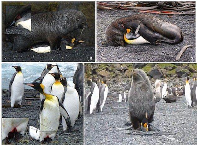 seals_penguins_02