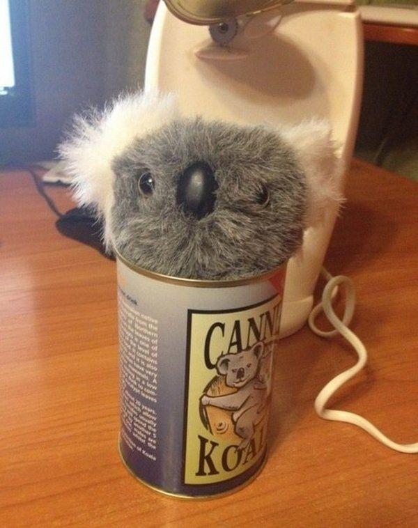 canned_koala_04