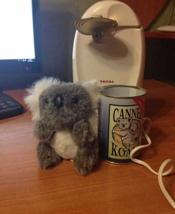 canned_koala_05