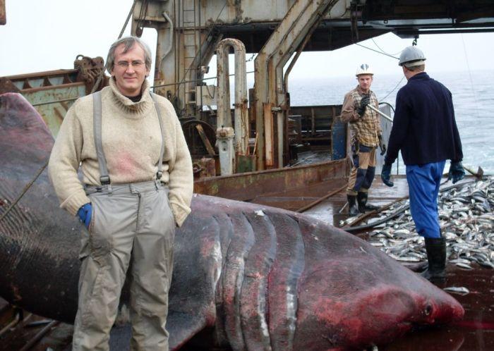 shark_08