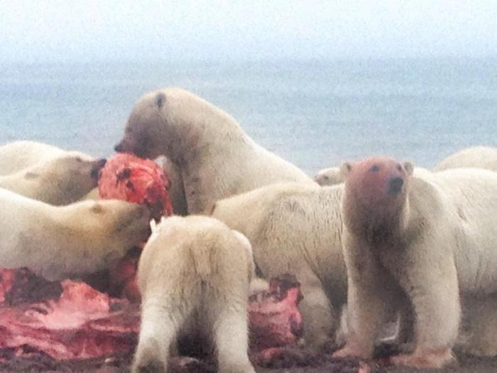 polar_bears_selfie_04
