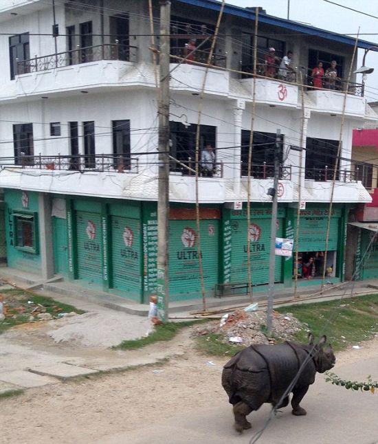 rhino_nepal_01