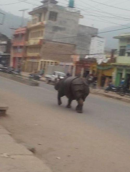rhino_nepal_03
