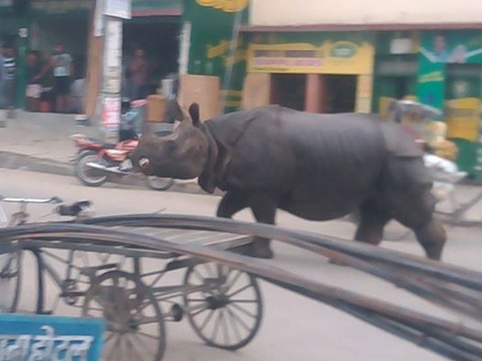 rhino_nepal_04