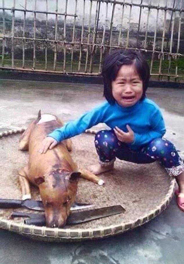 vietnam_dog_01