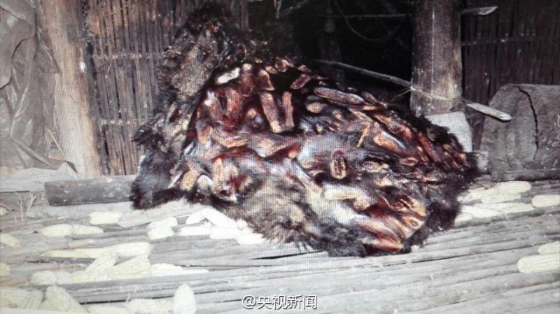 panda_fur_03