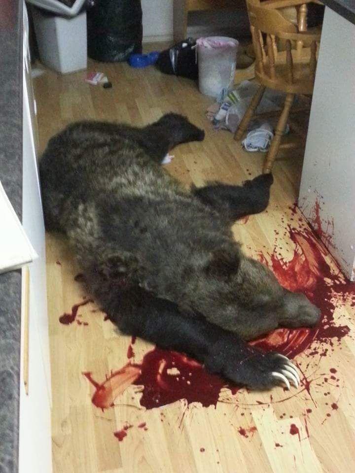 medved-zabralsja-v-dom_02