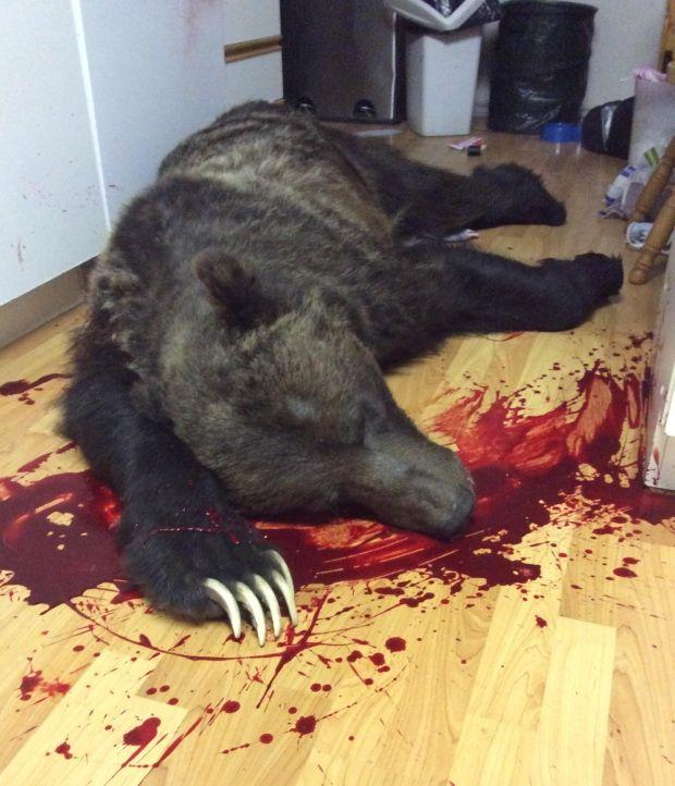 medved-zabralsja-v-dom_03