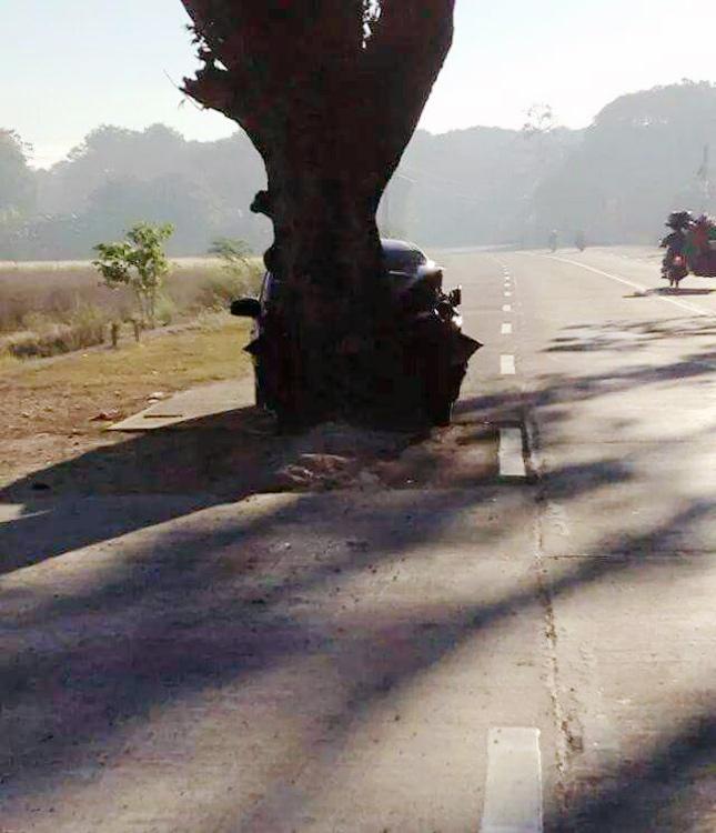 wtf-tree2
