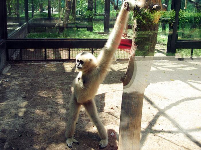 animals_posing_41