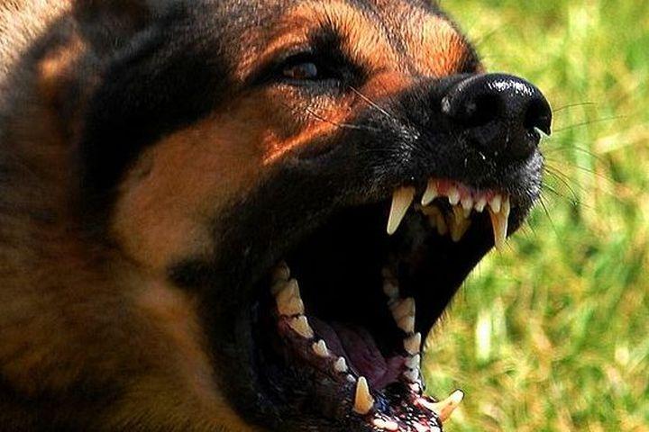 zúrivý-pes