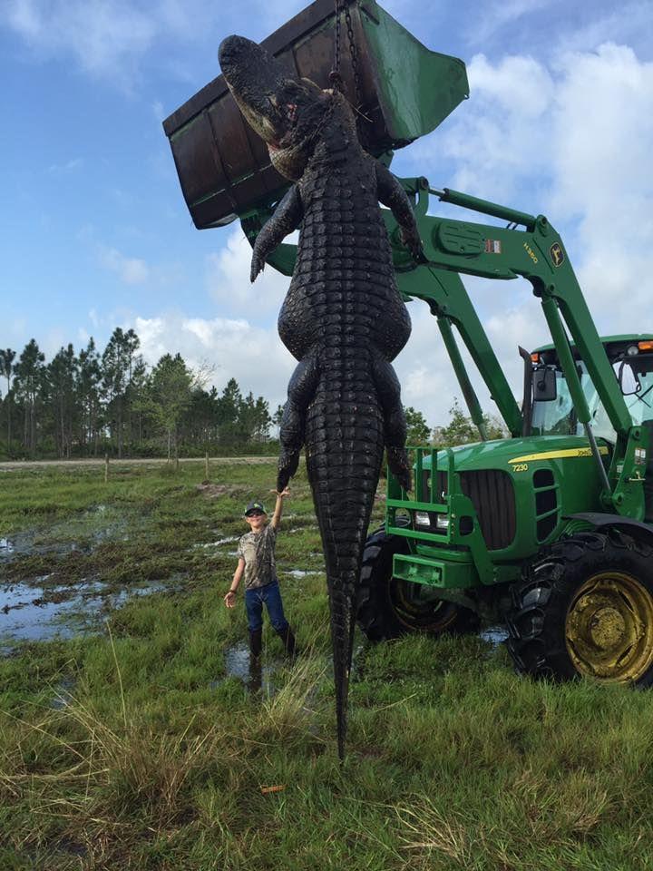 ogromnyj-alligator_02