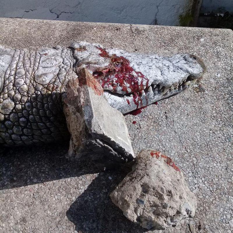 ubijstvo-krokodila_04