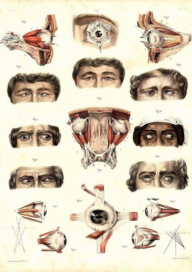 anatomicheskie-kartinki_02