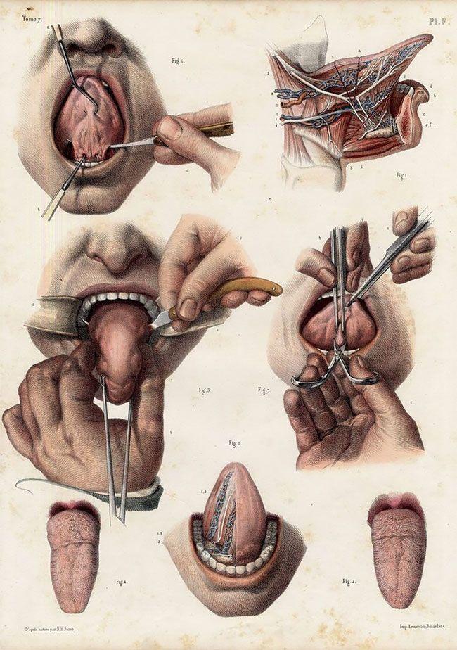 anatomicheskie-kartinki_09