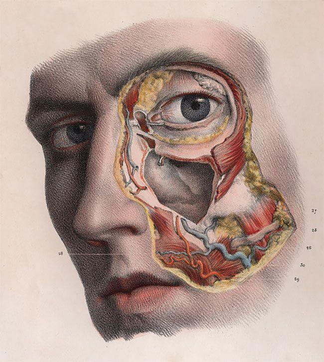 anatomicheskie-kartinki_14