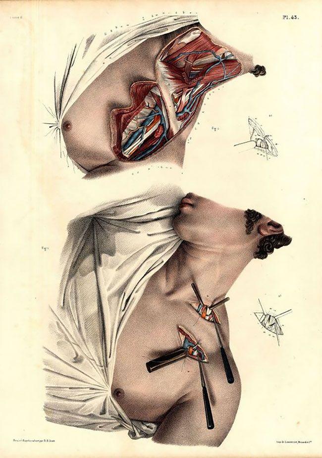 anatomicheskie-kartinki_16
