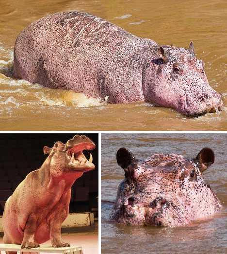 pink_animals_9b