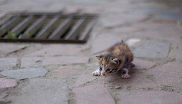 awww_adorable_kittens_640_91