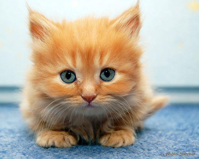 awww_adorable_kittens_640_97