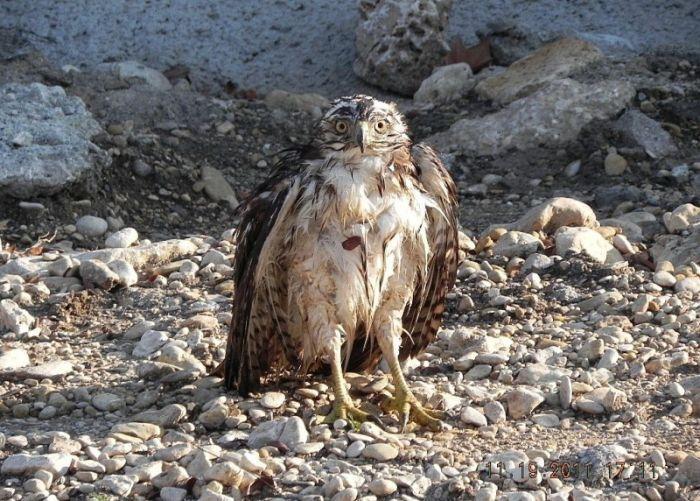 falcon_vs_snake_08