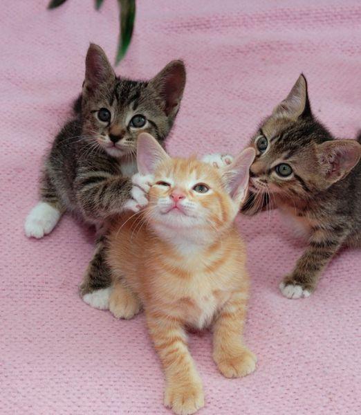 awww_adorable_kittens_640_57
