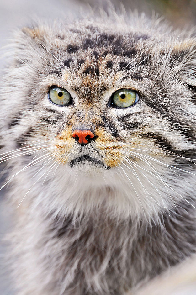 Wild-Animal-Eye-Retinas-8