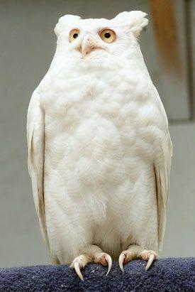 albino-37