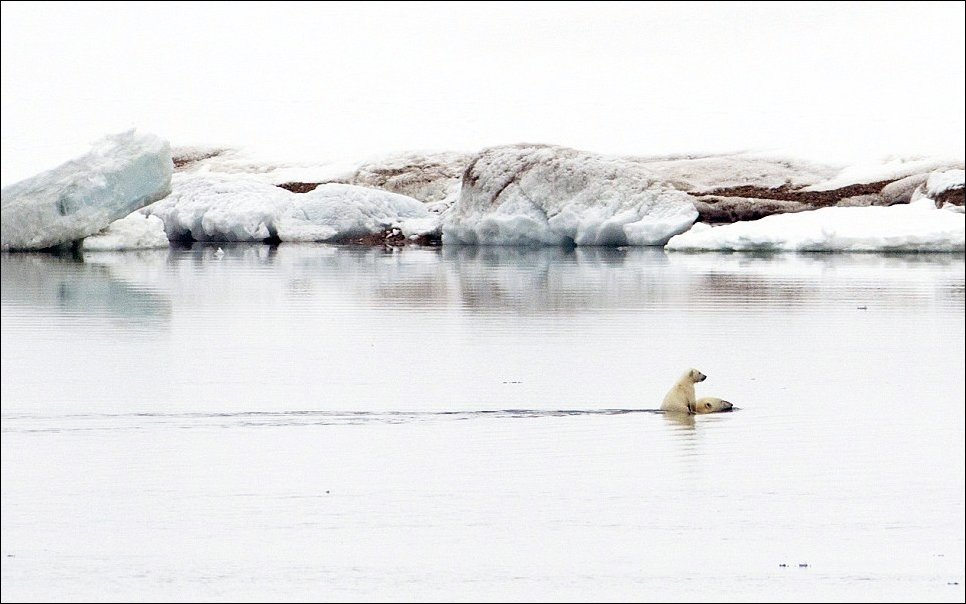 polar-bear-cub-01
