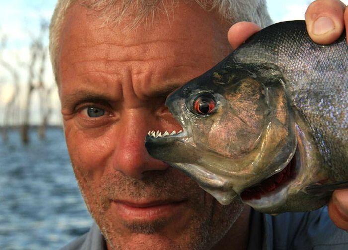 killer_fish_14