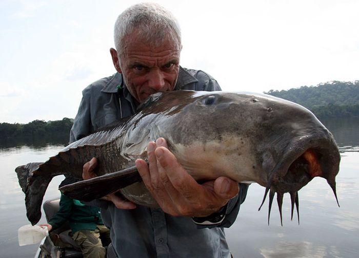 killer_fish_28