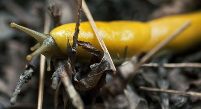 slugs_20