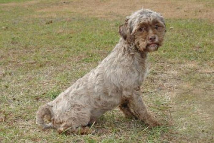 this_dog_has_a_man_face_01